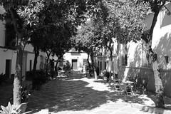 Plaza de la Alianza (just.Luc) Tags: trees bomen arbres bäume bn nb zw monochroom monotone monochrome bw árboles spain spanje espagne españa spanien andalusië andalucía andalusien andalousie andalusia sevilla seville séville siviglia europa europe square place plein piazza plaza