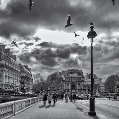 Up With The Birds (sdupimages) Tags: composition noirblanc blackwhite noiretblanc street rue bw nb monochrome bird oiseau sky clouds nuages ciel ville city square carré batiment building