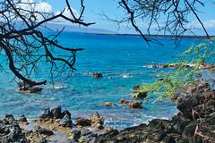 Blue vs Aqua (Kirt Edblom) Tags: maui mauihawaii hawaii gaylene water waves waterscape wife milf blue bluesky bluewater tree trees tropical rocks rock landscape lava lavaflows ocean pacific pacificocean scenic serene hidden seascape kirt kirtedblom edblom luminar nikon nikond7100 nikkor18140mmf3556