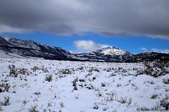 Mammoth Mountain, Eastern Sierra, California (rollie rodriguez) Tags: mammothmountain easternsierra california
