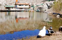 Nogoon Nuur 2 (Cath Forrest) Tags: ulaanbaatar mongolia nogoon nuur greenlake urban city gerdistrict nogoonnuur ducks water lake blue white boathouse building