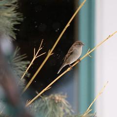 070. Bird (Misty Garrick) Tags: arboretum universityofminnesotalandscapearboretum landscapearboretum flowershow bird birds birding