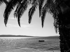 It is not Caribic, it is Croatia (Alex von Sachse) Tags: croatia kastela palm summer sea adrian adriatic water boat isle monocrome fineart blackandwhite travel travelphotography landscape nature framed idyllic beautiful greatplace