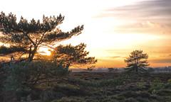 hide and seek (Zoom58.9) Tags: sky clouds tree pagan landscape nature outside sun sunset europe germany arensch cuxland himmel wolken bäume heide landschaft natur draussen sonne sonnenuntergang europa deutschland niedersachsen canon eos 50d baum gras feld