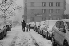 #GSM Not alone (Listenwave Photography) Tags: blizzard winter sigmadp3m foveon vps640 listenwavephotography gsm