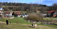 (Gerlinde Hofmann) Tags: germany thuringia village bürden pony horse pond barn