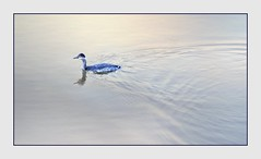 Moment of Zen (Christina's World!) Tags: duck bird nature pond sandiego coronado california scenic reflection light texture swimming waterscene waterfowl browneyes minimalism blue colors dreamy frame feathers waterdrops exhibitionoftalent fragiletouch negativespace kurtpeiser