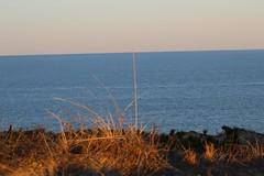 Dune Grass 2 (NatureChaserPhotos) Tags: marconi wellfleet capecod trees sunset beach dune dunegrass sky ocean nature
