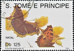 Sao Tome And Principe (17) 1991 Christmas - Butterflies (DC Stamps) Tags: sao tome principe stamps stampcollectors ©deckokiwiclarke ©deckoclarke stampclub explore spacestamps mintstamps usedstamps miniaturesheets souvenirsheet postagestamps worldstamps stamp space philately international astronomical orbit