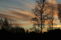 Afterglow (gripspix (Easter Break 4 Family)) Tags: 20190216 schwenningermoos swamp sumpflandschaft moor tree baum afterglow abendrot