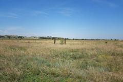 DSC33_23380 (heartinhawaii) Tags: landscape field prairie plains fence sunflowers rural adamscounty henderson colorado southplattetrail nature summer nikond3300