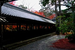 Corridor (tez-guitar) Tags: autumn 紅葉 autumn leaves kyoto temple corridor leicax1 leica