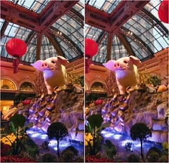 Pig Under Glass II (turbguy - pro) Tags: 3d crosseye stereo