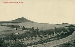 Steptoe Butte, circa 1915 - Colfax, Washington (Shook Photos) Tags: postcard postcards palouse colfaxwashington colfax washington whitmancounty steptoebutte orchard agriculture farm farming