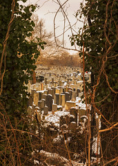(Levi Mandel (ig: @levimandel)) Tags: longisland newyork winter snow street cemetery graveyard depth graphic secret queens
