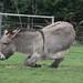 Donkey Rolling
