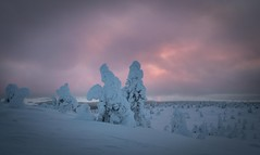 Sky Colouring (MrBlackSun) Tags: riisitunturi riisitunturinationalpark finland sunrise landscape nature nikon d850 naturephotography lapland frozen frozentrees forest winter
