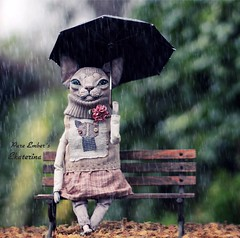 ☔️ Umbrella (pure_embers) Tags: pure embers laura uk pureembers photography cat kitty sculpture anthropomorphic portrait cute sphynx textile sphinx umbrella rain ekaterina