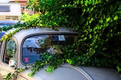 il tempo e le auto si fermano in via alipio (duegnazio) Tags: italia italy lazio roma rome duegnazio canon40d pigneto edera plant maggiolino automobile macchina car