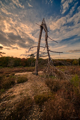 It forgot how to tree. (Alex-de-Haas) Tags: 11mm adobe adobelightroom aurorahdr aurorahdr2019 blackstone d850 dutch europa europe european hdr holland irix irix11mm irixblackstone lightroom limburg molenhoek mook mookerheide nederland nederlands netherlands nikon nikond850 skylum autumn beautiful beauty bomen boom bos cirrus cloud clouds colorful colourful fall forest heide herfst landscape landschaft landschap mooi nature natuur park pretty schoonheid sky skyscape sundown sunset tree trees warm wolk wolken woods zonsondergang