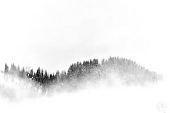 A tél szépsége (tarczalieva) Tags: természet tél winter