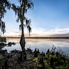 Lake Jessop Cypress (Ed Rosack) Tags: cypress usa landscape calm nature lakejesup ©edrosack lake florida clear wintersprings centralwindspark tree cloud sky centralflorida panorama water cloudy us