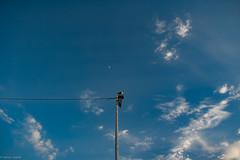 Sancti Petri... (hobbit68) Tags: fujifilm xt2 wolken sky clouds himmel laternenmast möve animal vogel bird tier espana espanol espagne sonne sonnenschein sommer spanien sun sunshine spain andalusien andalucia atlantik animals mond moon