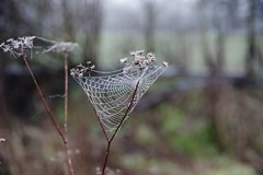 Photo of The web
