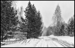 Snow storm / Метель (dmilokt) Tags: природа nature пейзаж landscape лес forest дерево tree снег snow dmilokt чб bw черный белый black white nikon d850