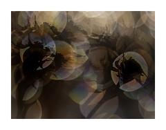 Out of focus (BeMo52) Tags: blätter bokeh flora hagebutten hips leaves macro makro natur nature rosen roses pentaconauto50mmf18