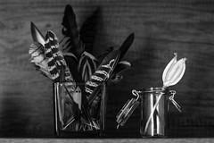 Shelf in a Summerhouse (sarkanymacska) Tags: tulip shelf feathers summerhouse zuiko12 fujixt20 bird feather madártoll tulipán váza polc nyaraló hungary olympus feketefehér bw