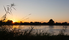 Sunset on the River _6375-2 (hkoons) Tags: bwabwaranationalpark campkwando southernafrica caprivistrip africa african caprivi divindu namibia tree abode community folklore folks growth home house housing landscape outdoors plants residence residency residential roof rural sky sunlight thatch tile town traditions trees vegetation village