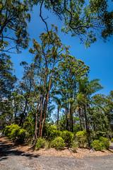 KB2_6620 (Kev Byrnes Photography) Tags: brisbane queensland australia au