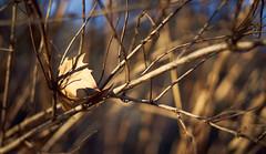 Stuck (KaeriRin) Tags: japan spring winter january sun nature green forest tree flowers shinjuku gyoen park sony alpha sony7m2 7mii zeiss 55mm18