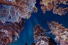 Aurore boréale prise depuis la zone des chalets (Jérôme LÊ) Tags: finlande laponie savukoski samperinsavotta finland lapland aurore auroreboreale aurora northernlights revontulet
