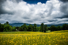 Golden Cades Cove Field and Church (Thanks for 1,000,000+ views) Tags: great smoky mountains national park gsmnp cades cove landscape frame full fx outdoor f28 d750 nikon copyright black blue green tree lightroom diffused light shade natural depth field pictures spring summer autumn fall winter escape fairytale wonderland forest photographer golden hour travel sun prime 1755mm yellow flowers church