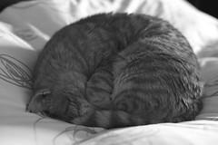 IMG_3419BW Rubio, Mallorca (Fernando Sa Rapita) Tags: gato gatito gatita cat mascota pet blancoynegro bw canon canoneos eos6d