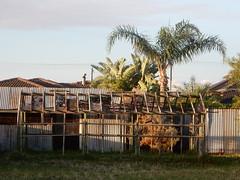 Shed Frame (mikecogh) Tags: shed frame scaffold corrugatediron fence palms seaton