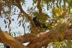 crow (22Lavender22) Tags: elements nature d3400 nikon wildlife australia