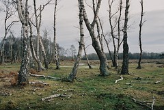 new forest i (Benedict Flett) Tags: newforest nationalpark film analogue england winter