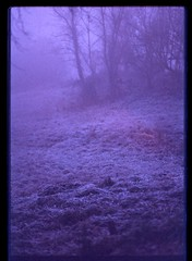 Blue Notes for Blue Devils (chiara ...) Tags: blue 35mm winter fog countryside film analogphotography analogue scotchchrome 800asa tungsteno pentax k1000