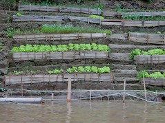 Rows of Vegetables (mikecogh) Tags: luangprabang mekongriver rows vegetables garden cultivation terraces