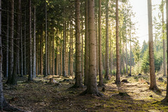 Good to be back (Petr Sýkora) Tags: les forest spring nature trees wandering tothenature