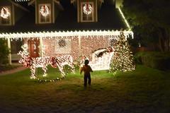 On the lawn (earthdog) Tags: 2018 nikon nikond5600 d5600 18300mmf3563 christmas decoration light christmaslight sanjose willowglen grass lawn house building soft blur