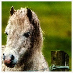 Horse (ianmiddleton1) Tags: hss sliderssunday horse nature country outdoors