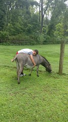 Emily the donkey getting a very good hug.