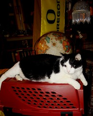 """""""Ozzy"""" (EcoSnake) Tags: ozzy cats friends pets favoriteplaces"""
