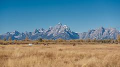 Grand Teton National Park (Maciek Lulko) Tags: usa usa2018 teton nationalpark nature landscape nikon nikond750 d750 maciejlulko wyoming grandteton grandtetonnationalpark nps nikkor2470 nikkor landscapes rockymountains west mountains range horses