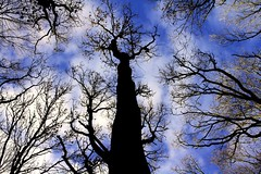 blue (haslerbryan) Tags: silhouette sky clouds trees canon60d canon