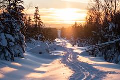 Sonnenuntergangsschneise (MadCyborg) Tags: erzgebirge fuji fujifilm gegenlicht oremountains schnee sonnenuntergang winter xt20 clearsky cold contrejour fantasticlight opposinglight snow sunset